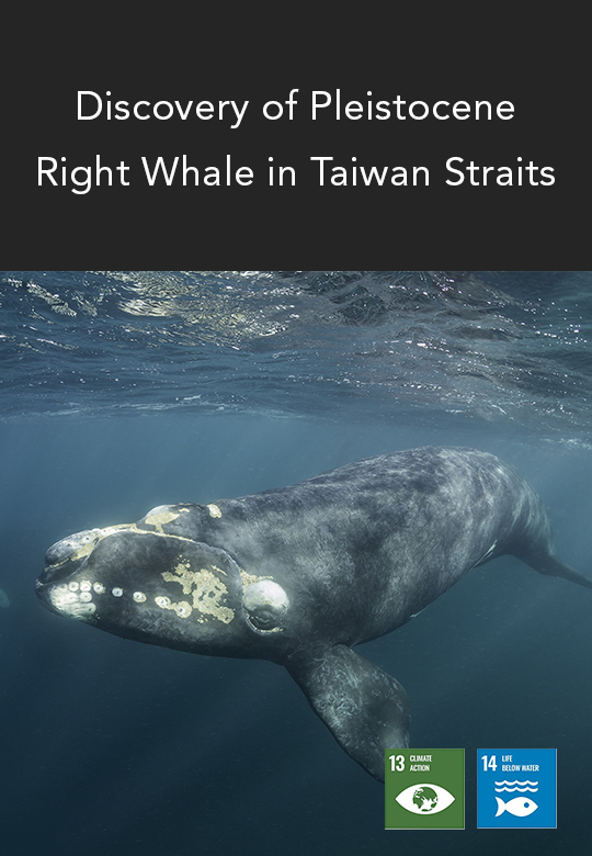 Right Whale Fossil – Remnants of the Taiwan Ice Age