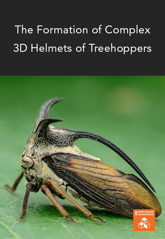 A Closer Look at the Treehopper Helmet Structure